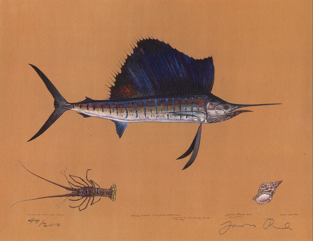 <title>Ocean Fishes</title>