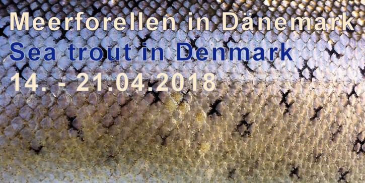 Meerforellenfischen - Guiding in Dänemark