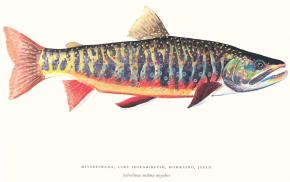 Aquarelle von James Prosek (Preis auf Anfrage)