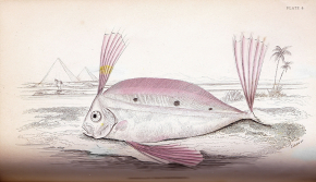 The Natural History of Fishes 1853