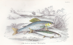 A History of British Fishes, Vol. 1 & 2, 18??