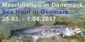 Meerforellenfischen - Guiding in Dänemark, 2 Tage Fischen
