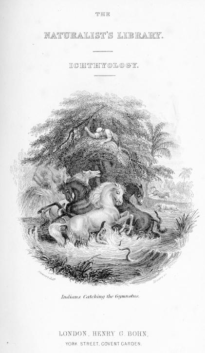 Fishes of British Guiana, part 2, 18??