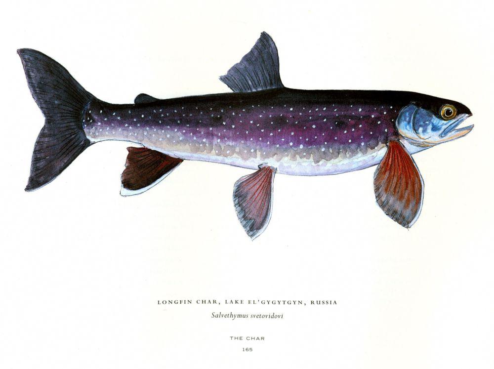 Salmon Trout Magazine