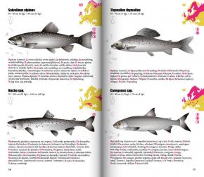 fishfinder - Buch von Friel und Suess
